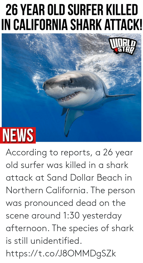 According: According to reports, a 26 year old surfer was killed in a shark attack at Sand Dollar Beach in Northern California. The person was pronounced dead on the scene around 1:30 yesterday afternoon. The species of shark is still unidentified. https://t.co/J8OMMDgSZk