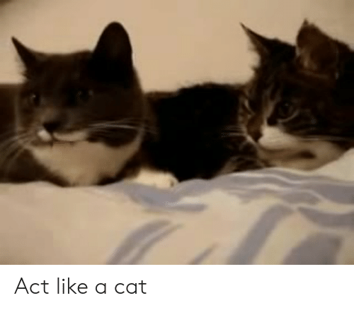 Memes, 🤖, and Cat: Act like a cat