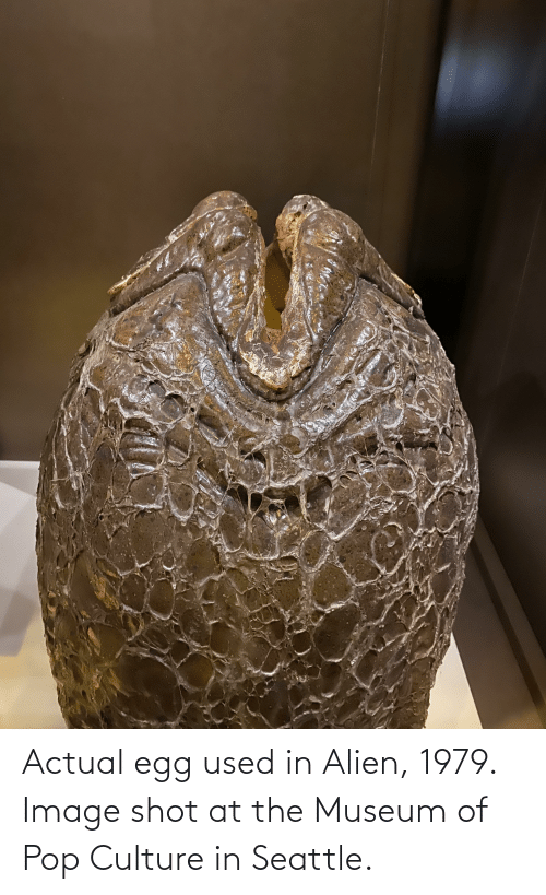 pop culture: Actual egg used in Alien, 1979. Image shot at the Museum of Pop Culture in Seattle.