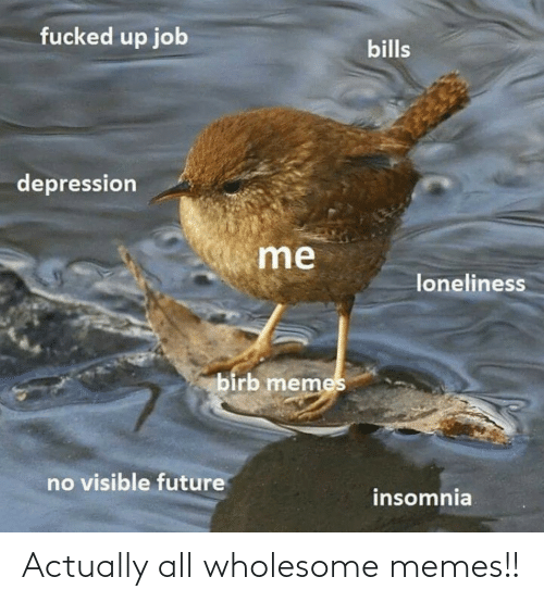 Wholesome Memes: Actually all wholesome memes!!