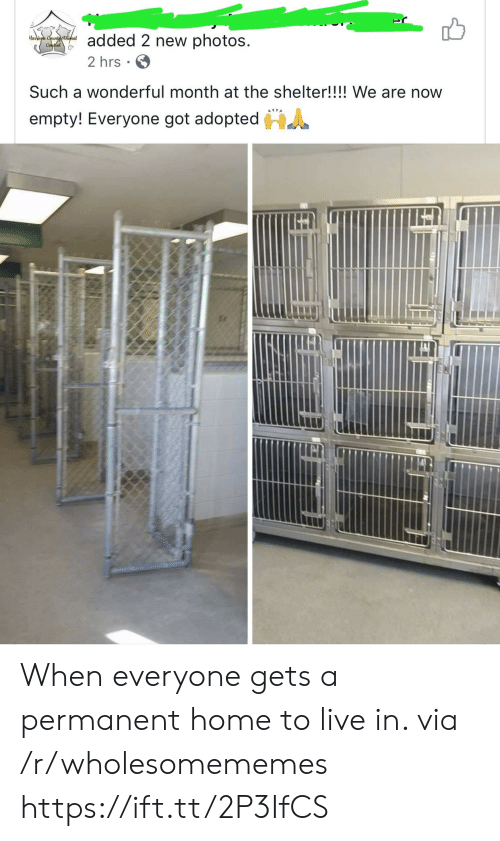 Home, Live, and Got: added 2 new photos  arison Countcthimal  ContelG  2 hrs  Such a wonderful month at the shelter!!!! We are now  HA  empty! Everyone got adopted When everyone gets a permanent home to live in. via /r/wholesomememes https://ift.tt/2P3IfCS