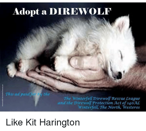 Westero: Adopt a DIREWOLF  This ad paid by the  The Winterfell Direwolf Rescue League  and the Direwolf Protection Act of 140 AC  Winterfelt, The North, Westeros Like Kit Harington
