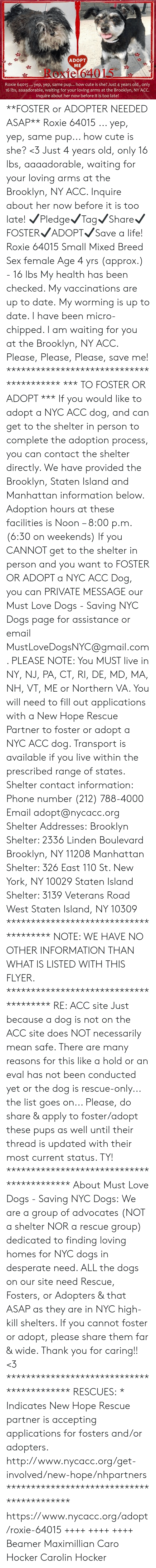 Cute, Desperate, and Dogs: ADOPT  ME  Roxie 64015  Roxie 64015.. yep, yep, same pup... how cute is she? Just 4 years old, only  16 lbs, aaaadorable, waiting for your loving arms at the Brooklyn, NY ACC.  Inquire about her now before it is too late! **FOSTER or ADOPTER NEEDED ASAP** Roxie 64015 ... yep, yep, same pup... how cute is she? <3 Just 4 years old, only 16 lbs, aaaadorable, waiting for your loving arms at the Brooklyn, NY ACC. Inquire about her now before it is too late!  ✔Pledge✔Tag✔Share✔FOSTER✔ADOPT✔Save a life!  Roxie 64015 Small Mixed Breed Sex female Age 4 yrs (approx.) - 16 lbs  My health has been checked.  My vaccinations are up to date. My worming is up to date.  I have been micro-chipped.   I am waiting for you at the Brooklyn, NY ACC. Please, Please, Please, save me!  **************************************** *** TO FOSTER OR ADOPT ***   If you would like to adopt a NYC ACC dog, and can get to the shelter in person to complete the adoption process, you can contact the shelter directly. We have provided the Brooklyn, Staten Island and Manhattan information below. Adoption hours at these facilities is Noon – 8:00 p.m. (6:30 on weekends)  If you CANNOT get to the shelter in person and you want to FOSTER OR ADOPT a NYC ACC Dog, you can PRIVATE MESSAGE our Must Love Dogs - Saving NYC Dogs page for assistance or email MustLoveDogsNYC@gmail.com.   PLEASE NOTE: You MUST live in NY, NJ, PA, CT, RI, DE, MD, MA, NH, VT, ME or Northern VA. You will need to fill out applications with a New Hope Rescue Partner to foster or adopt a NYC ACC dog. Transport is available if you live within the prescribed range of states.  Shelter contact information: Phone number (212) 788-4000 Email adopt@nycacc.org  Shelter Addresses: Brooklyn Shelter: 2336 Linden Boulevard Brooklyn, NY 11208 Manhattan Shelter: 326 East 110 St. New York, NY 10029 Staten Island Shelter: 3139 Veterans Road West Staten Island, NY 10309 **************************************  NOTE: WE HAVE NO OTHER INF