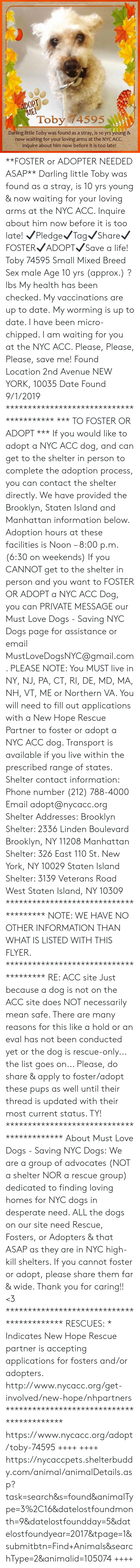 Animals, Desperate, and Dogs: ADOPT  ME!  Toby 74595  Darling little Toby was found as a stray, is 10 yrs young &  now waiting for your loving arms at the NYC ACC.  Inquire about him now before it is too late! **FOSTER or ADOPTER NEEDED ASAP** Darling little Toby was found as a stray, is 10 yrs young & now waiting for your loving arms at the NYC ACC. Inquire about him now before it is too late!  ✔Pledge✔Tag✔Share✔FOSTER✔ADOPT✔Save a life!  Toby 74595 Small Mixed Breed Sex male Age 10 yrs (approx.) ? lbs  My health has been checked.  My vaccinations are up to date. My worming is up to date.  I have been micro-chipped.   I am waiting for you at the NYC ACC.  Please, Please, Please, save me!  Found Location  2nd Avenue NEW YORK, 10035 Date Found 9/1/2019  **************************************** *** TO FOSTER OR ADOPT ***   If you would like to adopt a NYC ACC dog, and can get to the shelter in person to complete the adoption process, you can contact the shelter directly. We have provided the Brooklyn, Staten Island and Manhattan information below. Adoption hours at these facilities is Noon – 8:00 p.m. (6:30 on weekends)  If you CANNOT get to the shelter in person and you want to FOSTER OR ADOPT a NYC ACC Dog, you can PRIVATE MESSAGE our Must Love Dogs - Saving NYC Dogs page for assistance or email MustLoveDogsNYC@gmail.com.   PLEASE NOTE: You MUST live in NY, NJ, PA, CT, RI, DE, MD, MA, NH, VT, ME or Northern VA. You will need to fill out applications with a New Hope Rescue Partner to foster or adopt a NYC ACC dog. Transport is available if you live within the prescribed range of states.  Shelter contact information: Phone number (212) 788-4000 Email adopt@nycacc.org  Shelter Addresses: Brooklyn Shelter: 2336 Linden Boulevard Brooklyn, NY 11208 Manhattan Shelter: 326 East 110 St. New York, NY 10029 Staten Island Shelter: 3139 Veterans Road West Staten Island, NY 10309 **************************************  NOTE: WE HAVE NO OTHER INFORMATION THAN WHAT IS LISTED WITH T