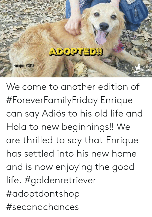 Life, Memes, and Good: ADOPTED!  Enrique #3118  Golden  Rescue  w.erw  w  : Welcome to another edition of #ForeverFamilyFriday  Enrique can say Adiós to his old life and Hola to new beginnings!! We are thrilled to say that Enrique has settled into his new home and is now enjoying the good life. #goldenretriever #adoptdontshop #secondchances