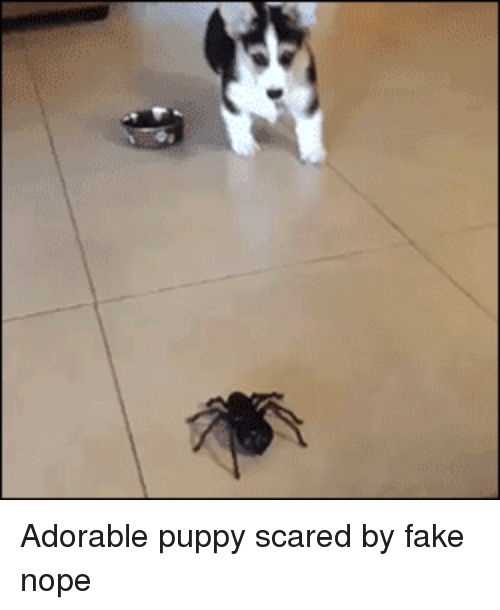 adorable puppy: Adorable puppy scared by fake nope