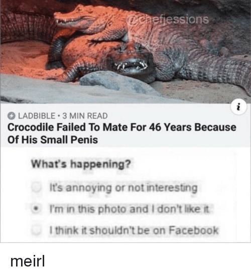 i dont like it: aefiessions  LADBIBLE 3 MIN READ  Crocodile Failed To Mate For 46 Years Because  Of His Small Penis  What's happening?  It's annoying or not interesting  .I'm in this photo and I don't like it  l think it shouldn't be on Facebook meirl