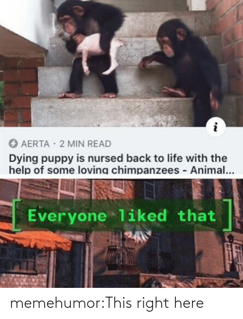 Puppy: AERTA · 2 MIN READ  Dying puppy is nursed back to life with the  help of some loving chimpanzees Animal...  Everyone liked that memehumor:This right here