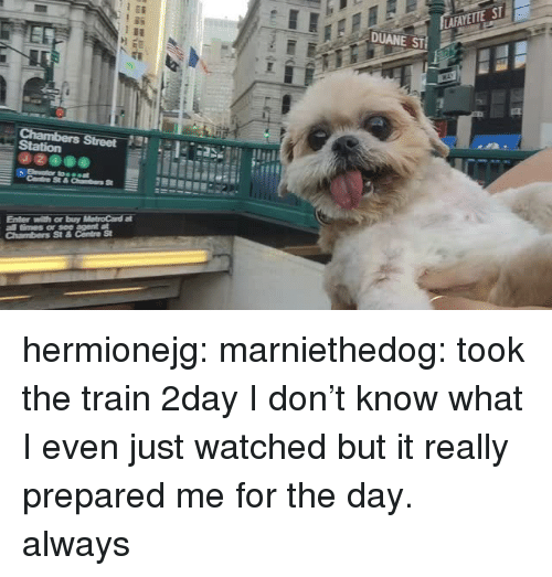 duane: AFAYETE ST  DUANE ST  09000 hermionejg:  marniethedog:  took the train 2day   I don't know what I even just watched but it really prepared me for the day.  always