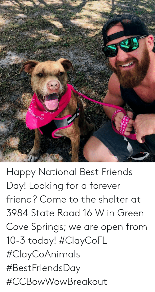 best friends day: AFIGHTER Happy National Best Friends Day! Looking for a forever friend? Come to the shelter at 3984 State Road 16 W in Green Cove Springs; we are open from 10-3 today! #ClayCoFL #ClayCoAnimals #BestFriendsDay #CCBowWowBreakout