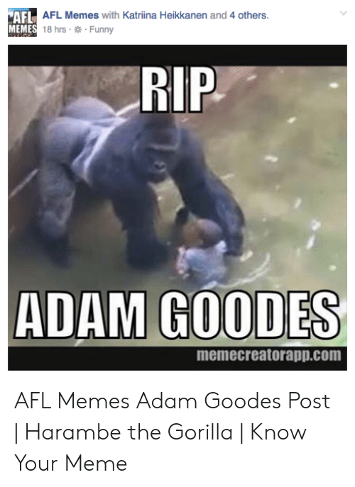 Funny, Meme, and Memes: AFL AFL Memes with Katriina Heikkanen and 4 others  MEMES 18 hrs Funny  RIP  ADAM GOODES  memecreatorapp.com AFL Memes Adam Goodes Post | Harambe the Gorilla | Know Your Meme