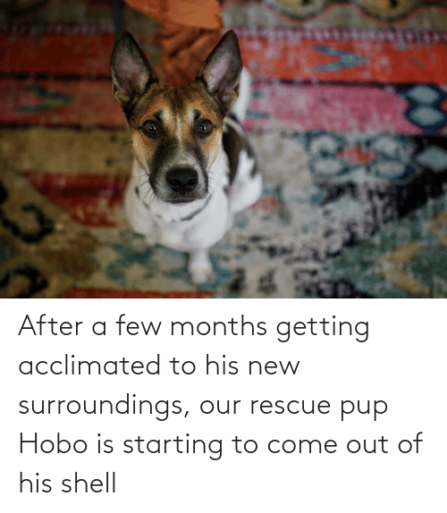hobo: After a few months getting acclimated to his new surroundings, our rescue pup Hobo is starting to come out of his shell