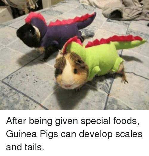 develope: After being given special foods, Guinea Pigs can develop scales and tails.