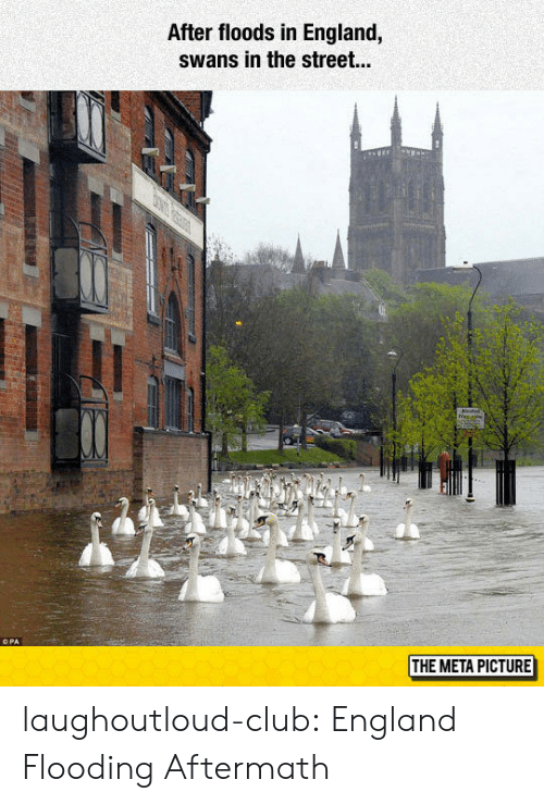 Floods: After floods in England,  swans in the street...  THE META PICTURE laughoutloud-club:  England Flooding Aftermath