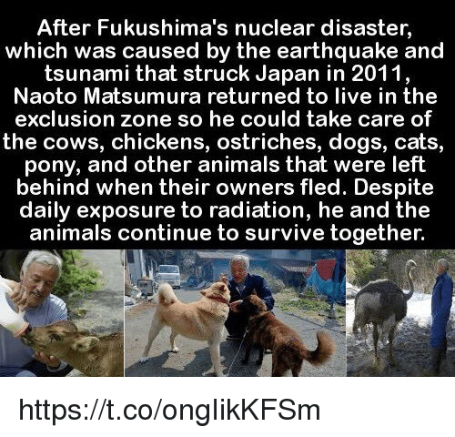 fukushima: After Fukushima's nuclear disaster,  which was caused by the earthquake and  tsunami that struck Japan in 2011  Naoto Matsumura returned to live in the  exclusion zone so he could take care of  the cows, chickens, ostriches, dogs, cats,  pony, and other animals that were left  behind when their own  fled. Despite  daily exposure to radiation, he and the  animals continue to survive together. https://t.co/ongIikKFSm