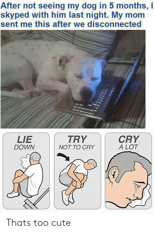 My Dog: After not seeing my dog in 5 months, I  skyped with him last night. My mom  sent me this after we disconnected  TRY  CRY  A LOT  LIE  DOWN  NOT TO CRY Thats too cute