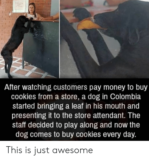 Presenting: After watching customers pay money to buy  cookies from a store, a dog in Colombia  started bringing a leaf in his mouth and  presenting it to the store attendant. The  staff decided to play along and now the  dog comes to buy cookies every day. This is just awesome