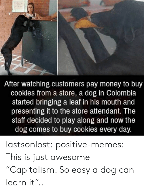 """Presenting: After watching customers pay money to buy  cookies from a store, a dog in Colombia  started bringing a leaf in his mouth and  presenting it to the store attendant. The  staff decided to play along and now the  dog comes to buy cookies every day. lastsonlost:  positive-memes:  This is just awesome  """"Capitalism. So easy a dog can learn it"""".."""