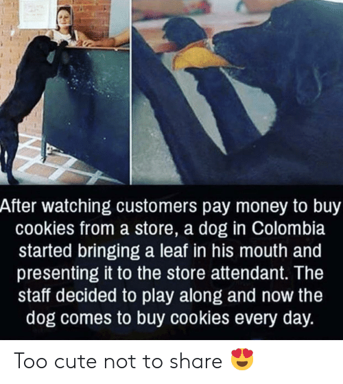 Colombia: After watching customers pay money to buy  cookies from a store, a dog in Colombia  started bringing a leaf in his mouth and  presenting it to the store attendant. The  staff decided to play along and now the  dog comes to buy cookies every day. Too cute not to share 😍