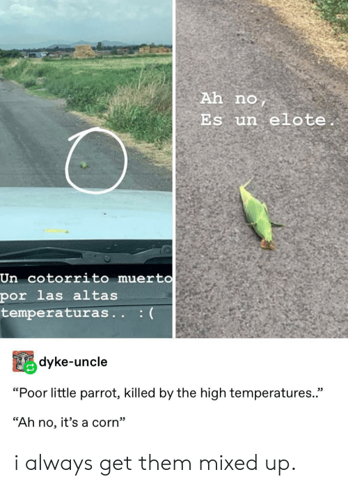 "corn: Ah no  Es un elote.  Un cotorrito muert0  por las altas  temperaturas.. :(  Pdyke-uncle  ""Poor little parrot, killed by the high temperatures.  ""Ah no, it's a corn"" i always get them mixed up."