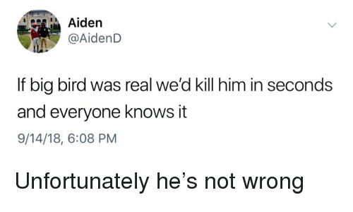 Aiden Aidend If Big Bird Was Real We D Kill Him In Seconds