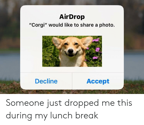 """Corgi, Break, and Photo: AirDrop  """"Corgi"""" would like to share a photo.  Decline  Accept Someone just dropped me this during my lunch break"""