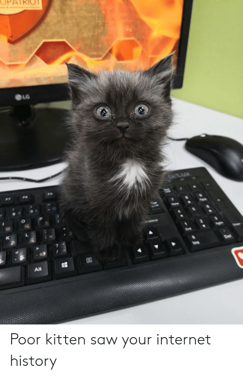 Dank, Internet, and Saw: AIRIOT  LG  Dewx  Alt Poor kitten saw your internet history