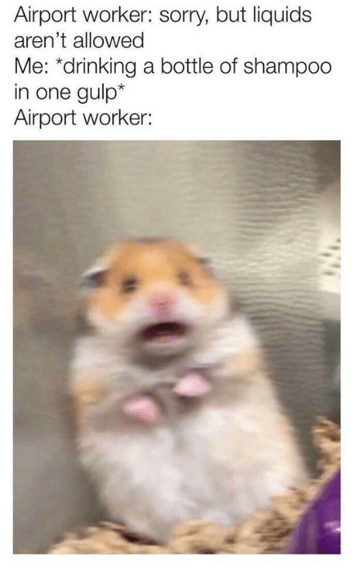 gulp: Airport worker: sorry, but liquids  aren't allowed  Me: *drinking a bottle of shampoo  in one gulp*  Airport worker: