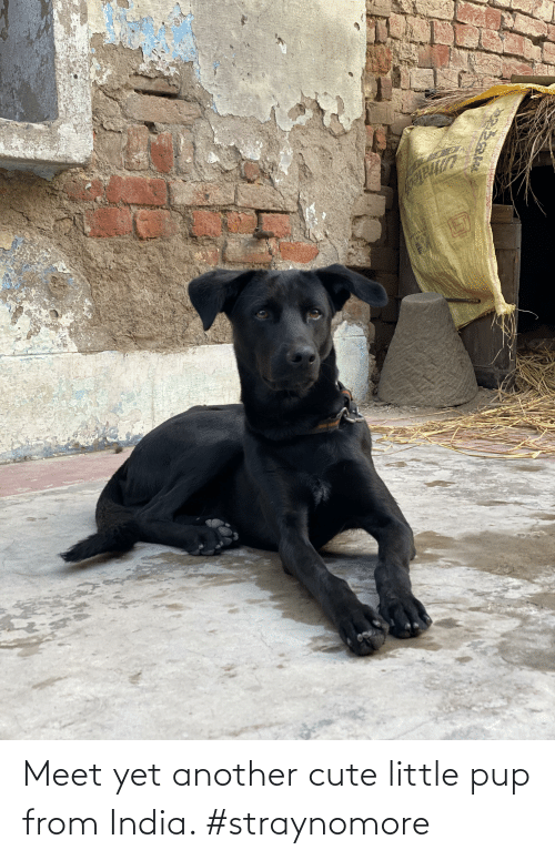 Cute, Lego, and India: Ake  ভदूरव  LEGO Meet yet another cute little pup from India. #straynomore