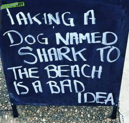 Bad, Dank, and Shark: AKINGA  DoG NAMED  SHARK TO  THE BEACH  SA BAD  IDEA