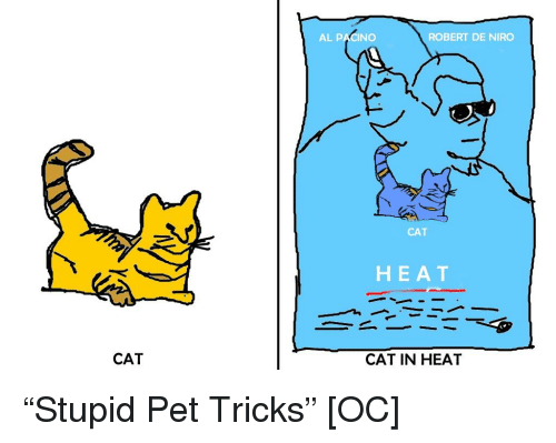do cats bleed when they are in heat