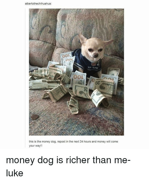 Memes, 🤖, and Dog: albertothechihuahua:  00L  this is the money dog, repost in the next 24 hours and money will come  your way!! money dog is richer than me- luke