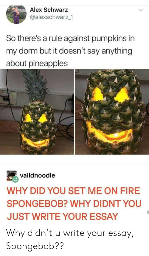 Fire, SpongeBob, and Say Anything...: Alex Schwarz  @alexschwarz 1  So there's a rule against pumpkins in  my dorm but it doesn't say anything  about pineapples  validnoodle  WHY DID YOU SET ME ON FIRE  SPONGEBOB? WHY DIDNT YOU  JUST WRITE YOUR ESSAY Why didn't u write your essay, Spongebob??