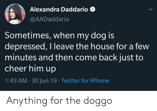 Iphone, Twitter, and House: Alexandra Daddario  @AADaddario  Sometimes, when my dog is  depressed, I leave the house for a few  minutes and then come back just to  cheer him up  1:43 AM 30Jun 19 Twitter for iPhone Anything for the doggo