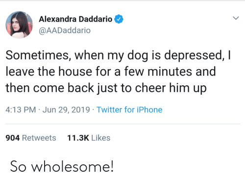 Iphone, Twitter, and House: Alexandra Daddario  @AADaddario  Sometimes, when my dog is depressed, I  leave the house for a few minutes and  then come back just to cheer him up  4:13 PM Jun 29, 2019 Twitter for iPhone  11.3K Likes  904 Retweets So wholesome!
