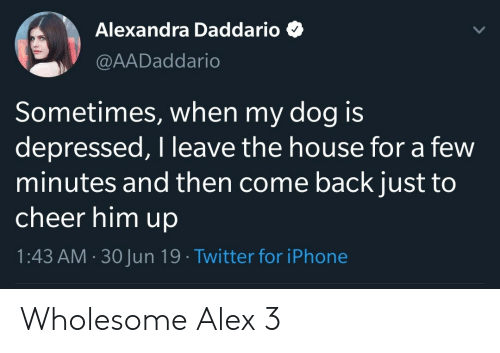 Iphone, Twitter, and House: Alexandra Daddario  @AADaddario  Sometimes, when my dog is  depressed, I leave the house for a few  minutes and then come back just to  cheer him up  1:43 AM 30Jun 19 Twitter for iPhone Wholesome Alex 3