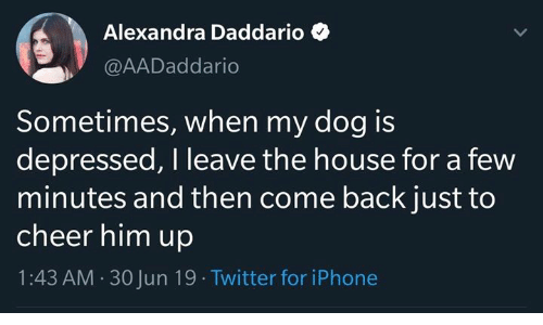 Iphone, Twitter, and House: Alexandra Daddario  @AADaddario  Sometimes, when my dog is  depressed, I leave the house for a few  minutes and then come back just to  cheer him up  1:43 AM 30 Jun 19 Twitter for iPhone