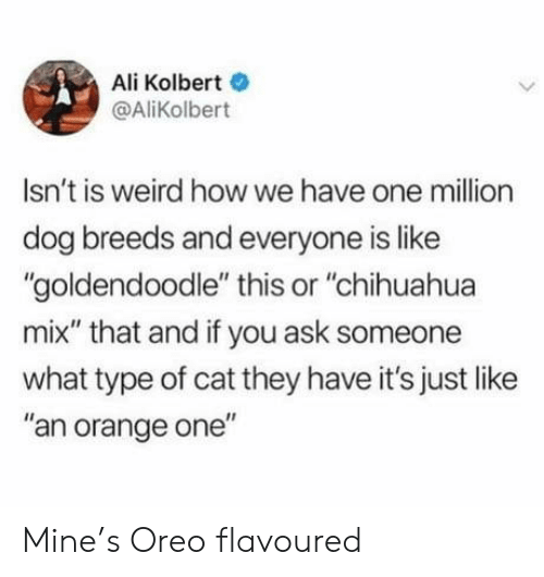 "Ali: Ali Kolbert  @AliKolbert  Isn't is weird howwe have one million  dog breeds and everyone is like  ""goldendoodle"" this or ""chihuahua  mix"" that and if you ask someone  what type of cat they have it's just like  ""an orange one"" Mine's Oreo flavoured"
