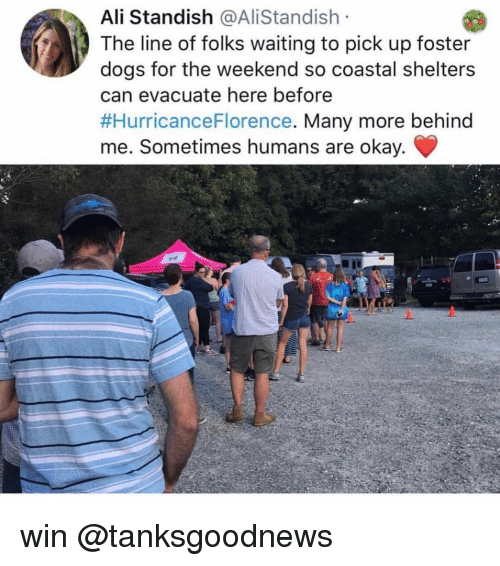 Shelters: Ali Standish @AliStandish  The line of folks waiting to pick up foster  dogs for the weekend so coastal shelters  can evacuate here before  #HurricanceFlorence. Many more behind  me. Sometimes humans are okay. win @tanksgoodnews
