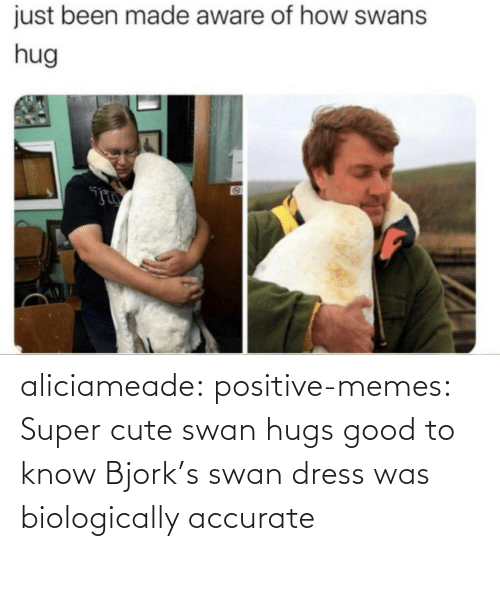 Cute, Memes, and Tumblr: aliciameade: positive-memes: Super cute swan hugs good to know Bjork's swan dress was biologically accurate