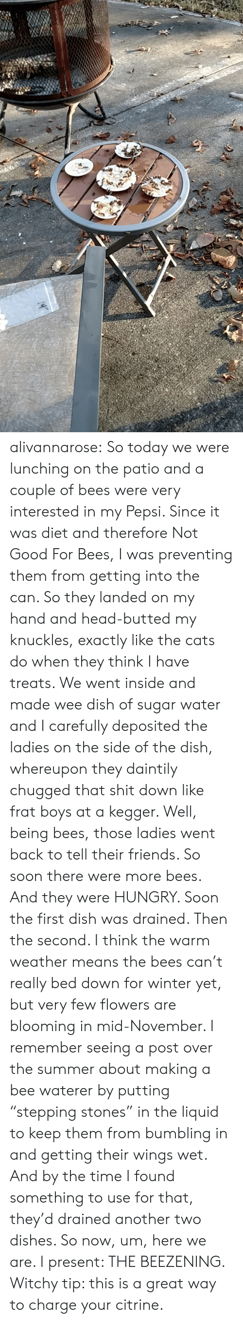 "frat: alivannarose:  So today we were lunching on the patio and a couple of bees were very interested in my Pepsi. Since it was diet and therefore Not Good For Bees, I was preventing them from getting into the can. So they landed on my hand and head-butted my knuckles, exactly like the cats do when they think I have treats. We went inside and made wee dish of sugar water and I carefully deposited the ladies on the side of the dish, whereupon they daintily chugged that shit down like frat boys at a kegger. Well, being bees, those ladies went back to tell their friends. So soon there were more bees. And they were HUNGRY. Soon the first dish was drained. Then the second. I think the warm weather means the bees can't really bed down for winter yet, but very few flowers are blooming in mid-November.  I remember seeing a post over the summer about making a bee waterer by putting ""stepping stones"" in the liquid to keep them from bumbling in and getting their wings wet. And by the time I found something to use for that, they'd drained another two dishes. So now, um, here we are.  I present: THE BEEZENING.   Witchy tip: this is a great way to charge your citrine."