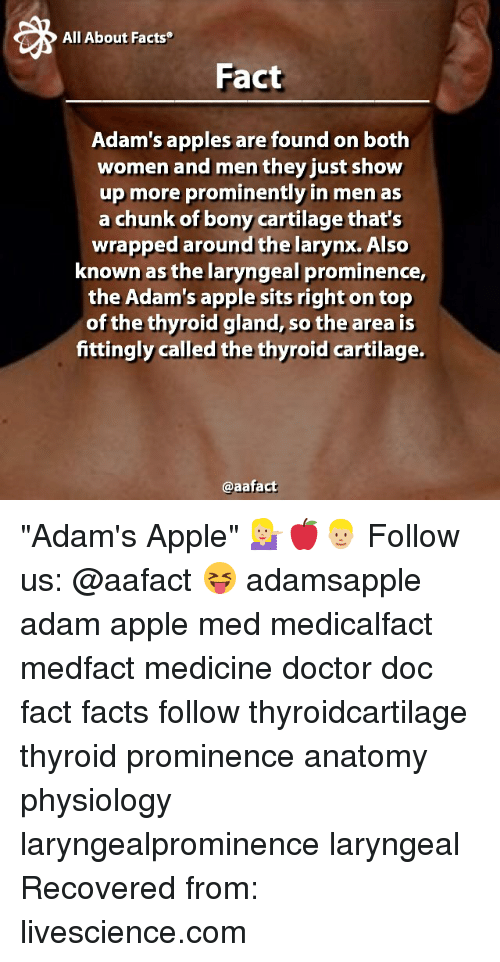 All About Facts Fact Adams Apples Are Found On Both Women And Men