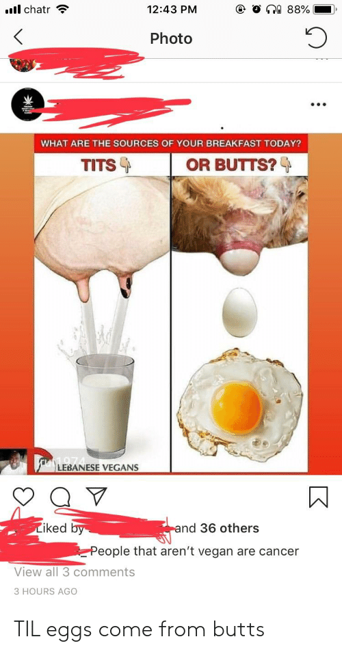 Tits, Vegan, and Cancer: all chatr  12:43 PM  Photo  TITS  OR BUTTS?  LEBANESE VEGANS  Liked  nd 36 others  People that aren't vegan are cancer  View all 3 comments  3 HOURS AGO TIL eggs come from butts