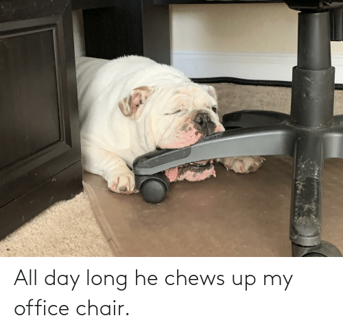 Chews: All day long he chews up my office chair.