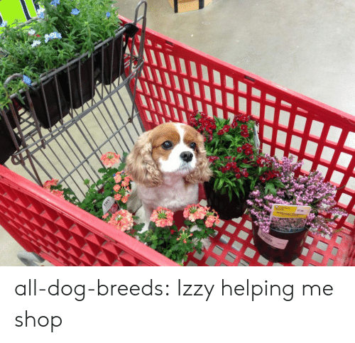 Tumblr, Blog, and Http: all-dog-breeds:  Izzy helping me shop