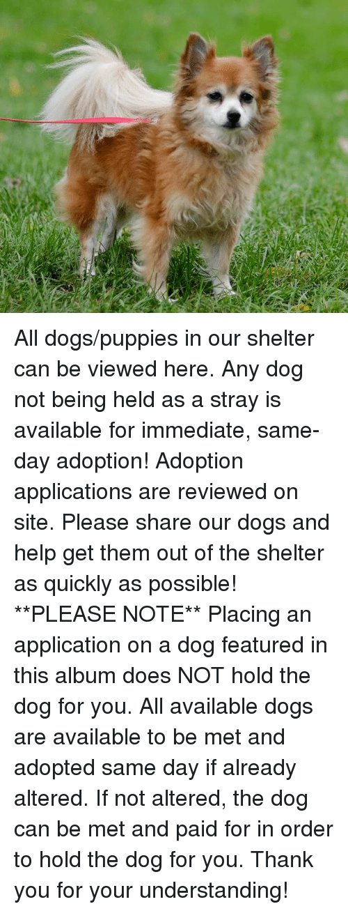 Dogs, Memes, and Puppies: All dogs/puppies in our shelter can be viewed here.  Any dog not being held as a stray is available for immediate, same-day adoption! Adoption applications are reviewed on site. Please share our dogs and help get them out of the shelter as quickly as possible!  **PLEASE NOTE**  Placing an application on a dog featured in this album does NOT hold the dog for you.  All available dogs are available to be met and adopted same day if already altered.  If not altered, the dog can be met and paid for in order to hold the dog for you.  Thank you for your understanding!