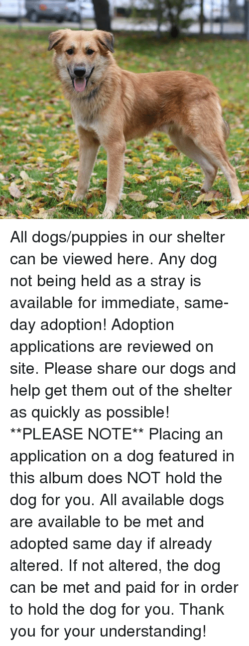 Please Share: All dogs/puppies in our shelter can be viewed here.  Any dog not being held as a stray is available for immediate, same-day adoption! Adoption applications are reviewed on site. Please share our dogs and help get them out of the shelter as quickly as possible!  **PLEASE NOTE**  Placing an application on a dog featured in this album does NOT hold the dog for you.  All available dogs are available to be met and adopted same day if already altered.  If not altered, the dog can be met and paid for in order to hold the dog for you.  Thank you for your understanding!
