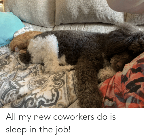 Coworkers: All my new coworkers do is sleep in the job!