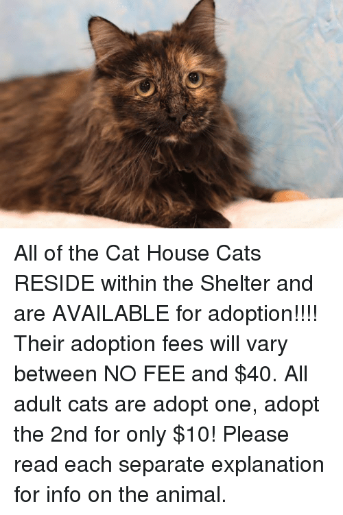Adopt House Cats