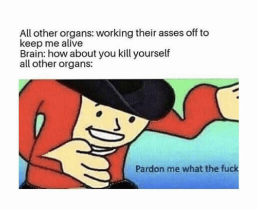 pardon me: All other organs: working their asses off to  keep me alive  Brain: how about you kill yourself  all other organs:  Pardon me what the fuck